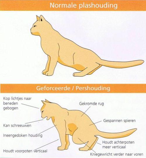 Plashouding kat